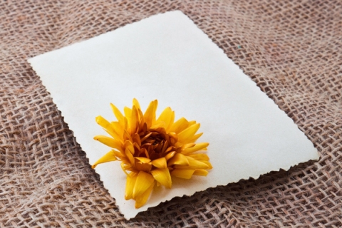 Blank card with flower